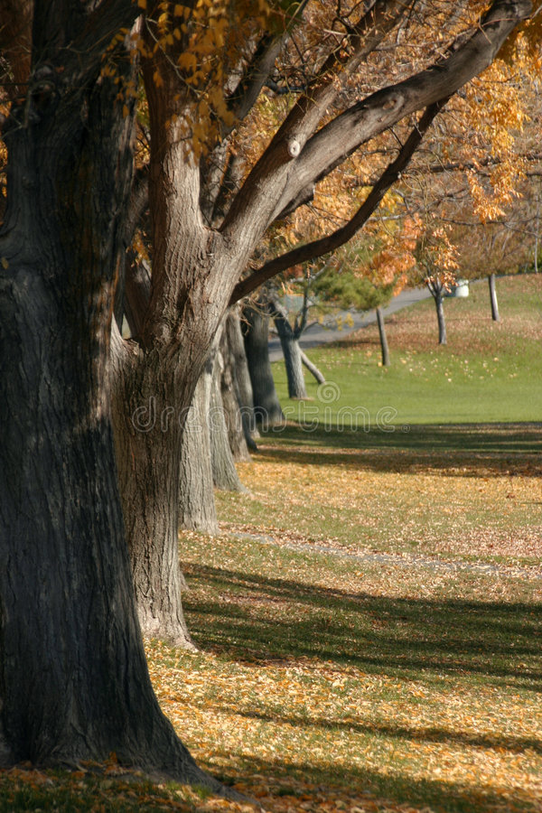 Tree and a Park royalty free stock image