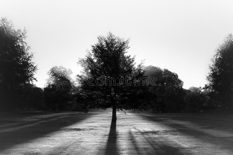 Tree in park against sun BW stock images