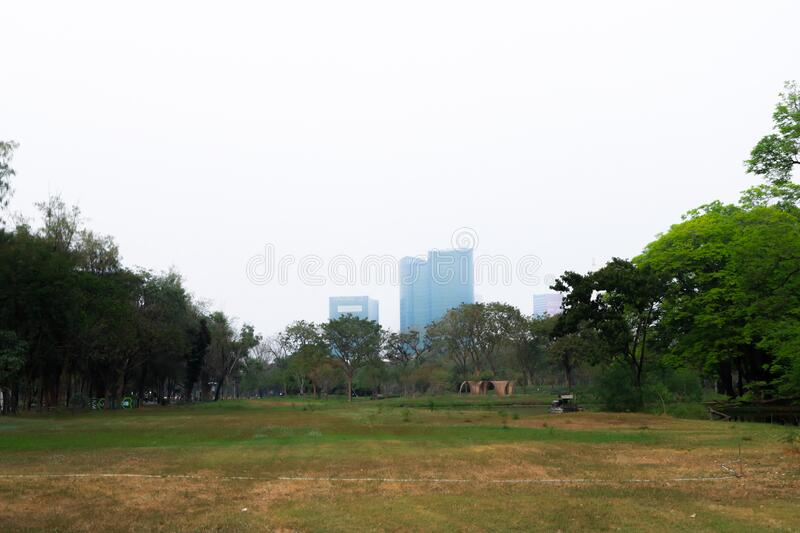 Tree park in city. landscape outdoor photography. Cityscape stock image