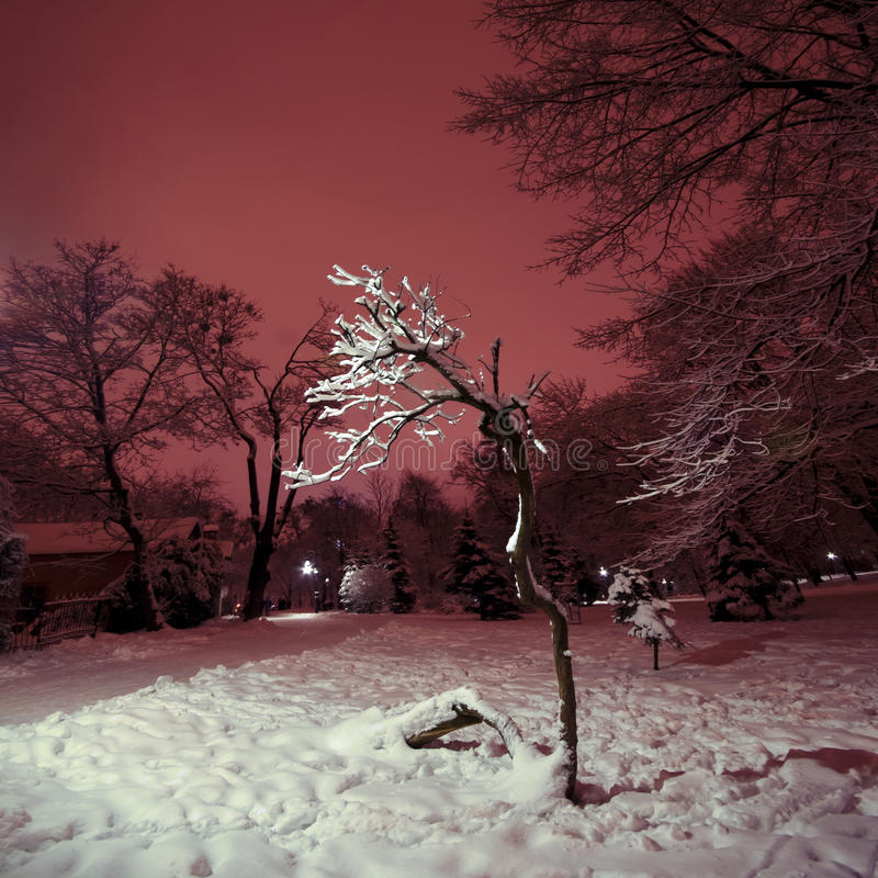 Download Tree in the park at night stock image. Image of snow - 28556145