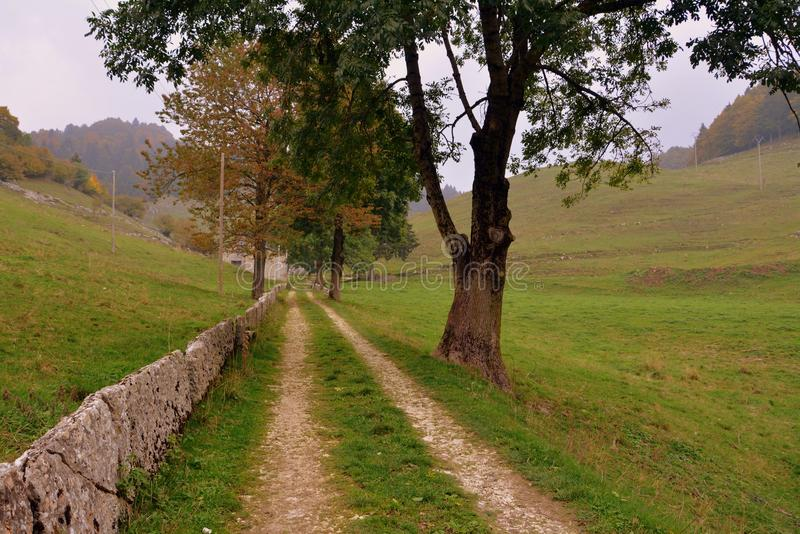 Tree, Path, Grassland, Pasture royalty free stock photo