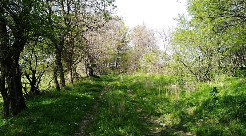 Download Tree path stock photo. Image of forest, tree, cemetery - 114004332