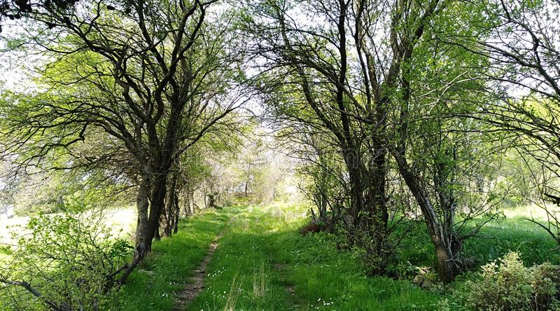 Download Tree path stock photo. Image of sergeant, season, çanakkale - 114004514