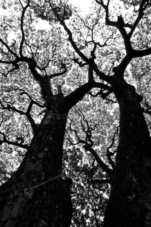 Tree pattern. In Chiangmai University stock images