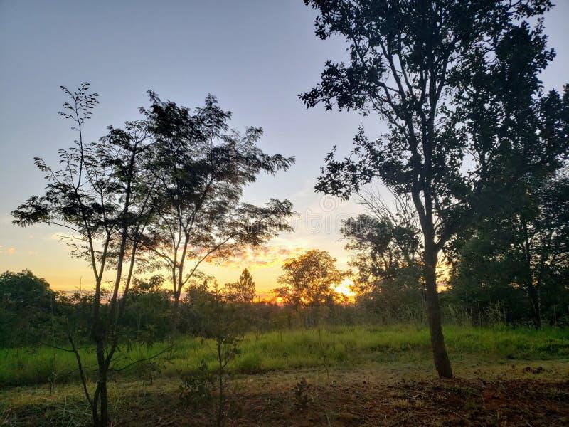 Tree. Peace, florest, green, sun stock images