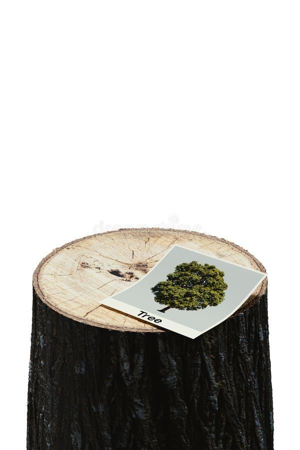 Tree photos on cut stumps stock image