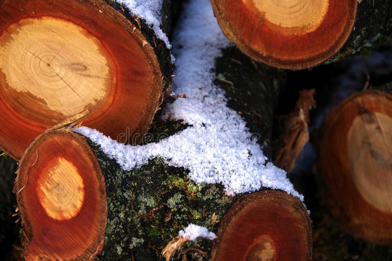 Felled and sawn tree with snow 2. Tree pieces with yellow and orange-colored Wood, Sawn pieces of wood with snow royalty free stock photo