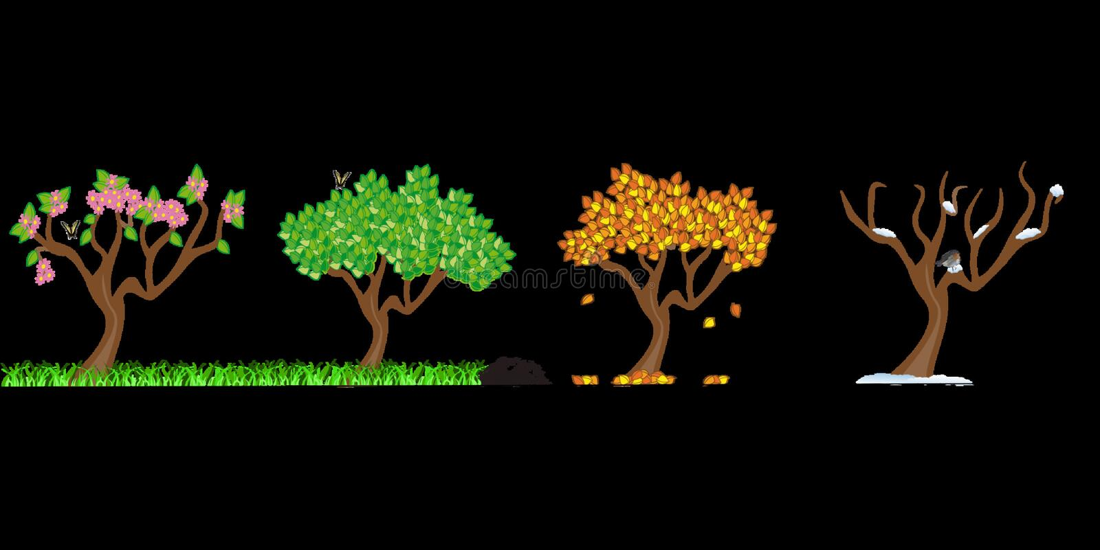 Tree, Plant, Branch, Organism stock image