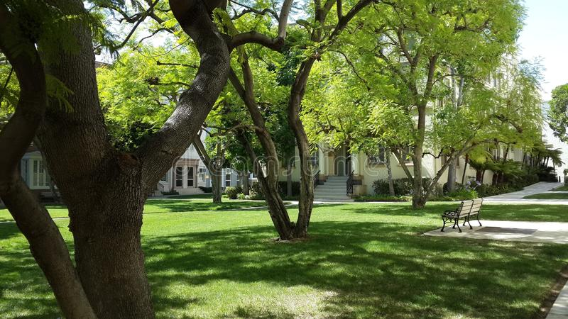 Tree, Plant, Grass, Park stock photos