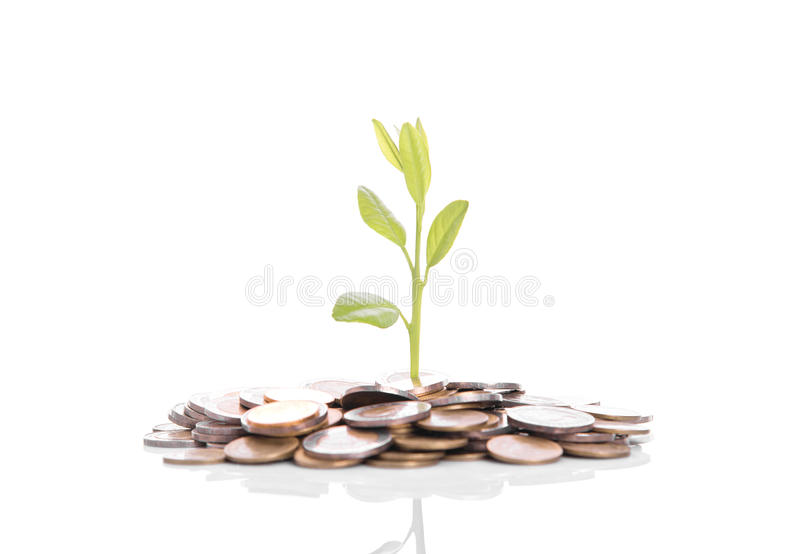 Tree plant growing on gold pile coins. concept investment money royalty free stock photography
