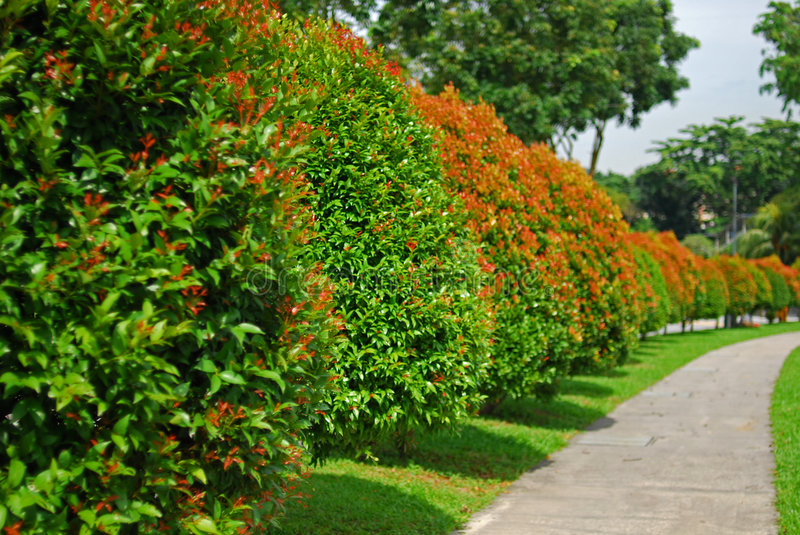 Tree, plant and walk path in the park stock image