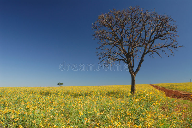 Tree with plantation and flowers stock photos