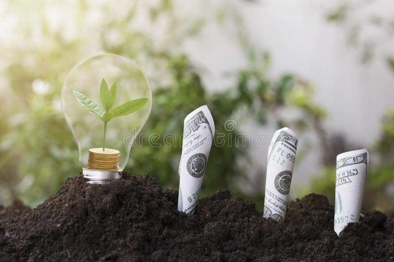 Tree planting and growth up on money coin, stacked on light bulb with soil and dollars, banknote. concept in save World environmen stock image