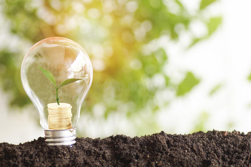 tree planting and growth up on money coins , stacked on light bulb with soil stock photo