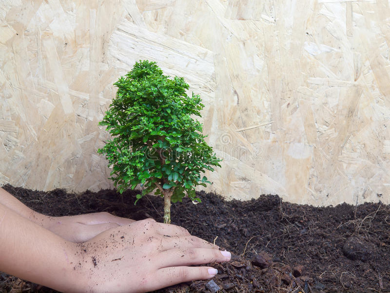 Tree planting. And Nature Conservation royalty free stock photos