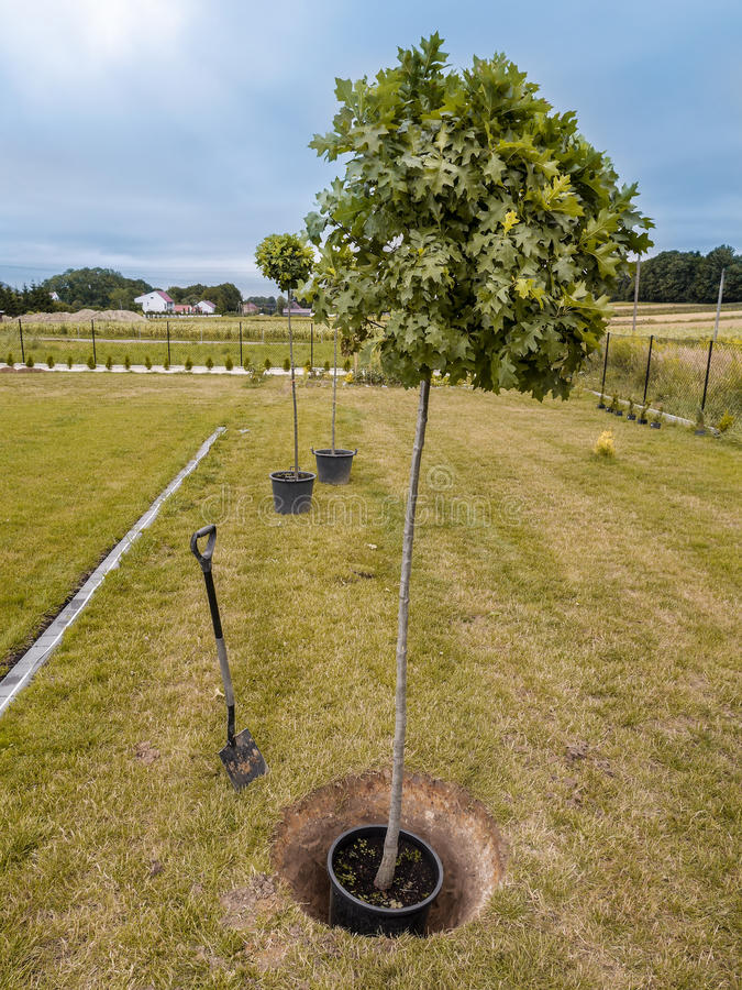 Tree planting royalty free stock images