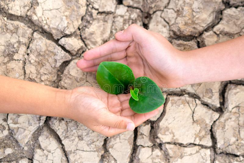 Tree planting on volunteer family`s hands for eco friendly and corporate social responsibility campaign concept, Hands holding. A tree growing on cracked ground royalty free stock photo