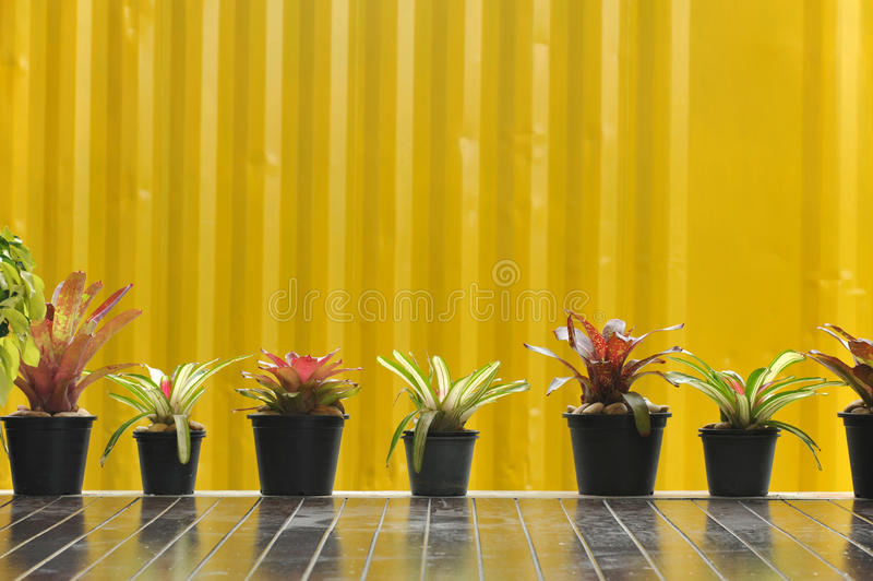 Tree Pot On Yellow Wall Royalty Free Stock Photography