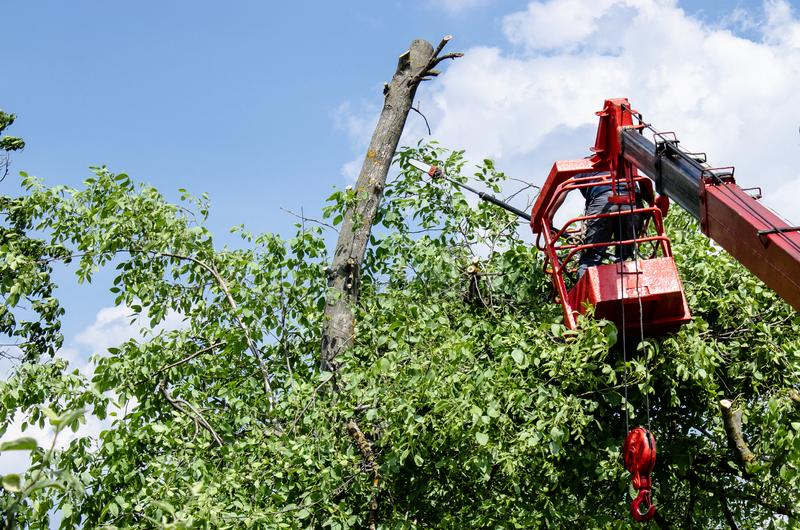 Tree pruning and sawing by a man with a chainsaw standing on the platform of a mechanical chairlift stock images