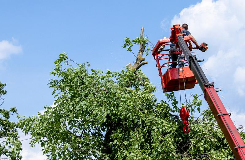 Tree pruning and sawing by a man with a chainsaw standing on the platform of a mechanical chairlift royalty free stock photography