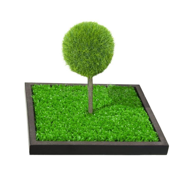 Tree on a Raised Garden