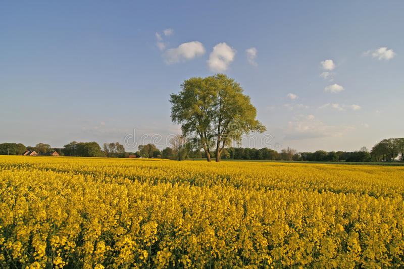 Tree with field in Lower Saxony, Germany stock image