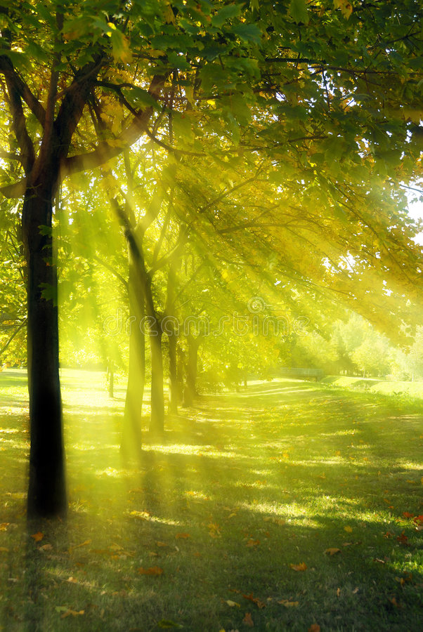 Download Tree with rays of light stock photo. Image of peaceful - 8185860