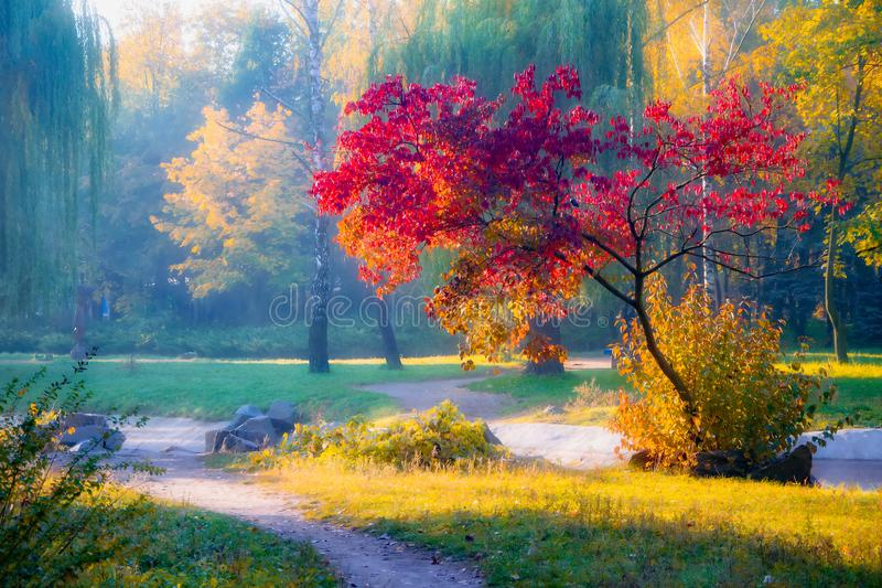 Tree with red leaves in autumn park in sunlit. Autumn landscape of nature in october clear morning. Amazing view on colorful scenic nature. Oil painting effect stock photos
