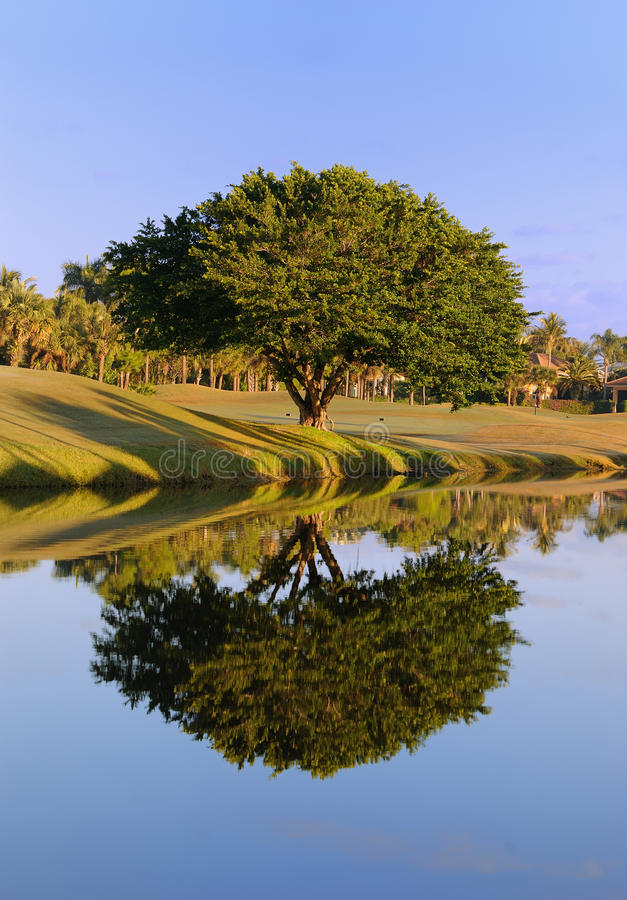 Download Tree Reflection stock image. Image of landscapes, outdoors - 17656471