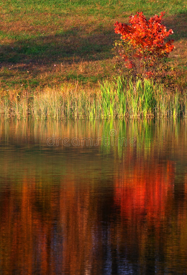Download Tree reflection stock photo. Image of fall, shadow, sunlight - 239702