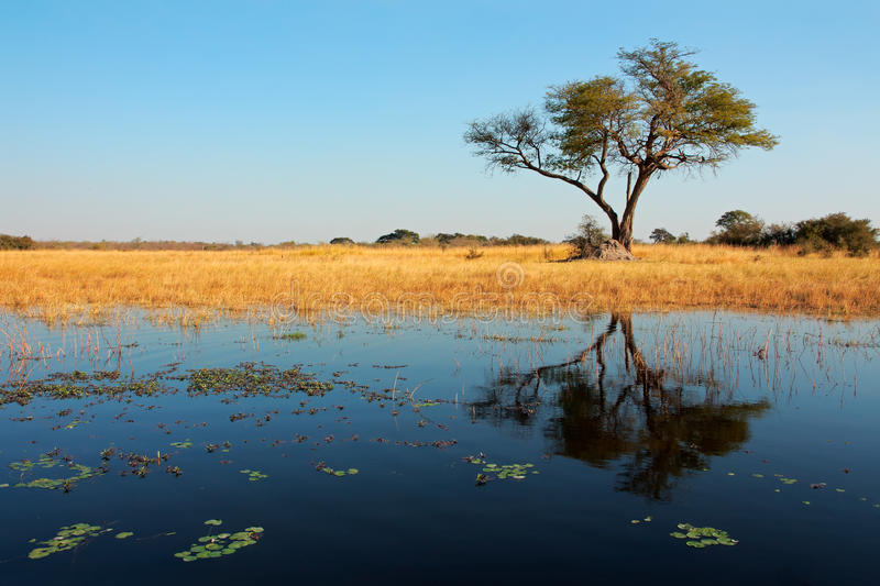 Download Tree And Reflection Stock Photo - Image: 36456650