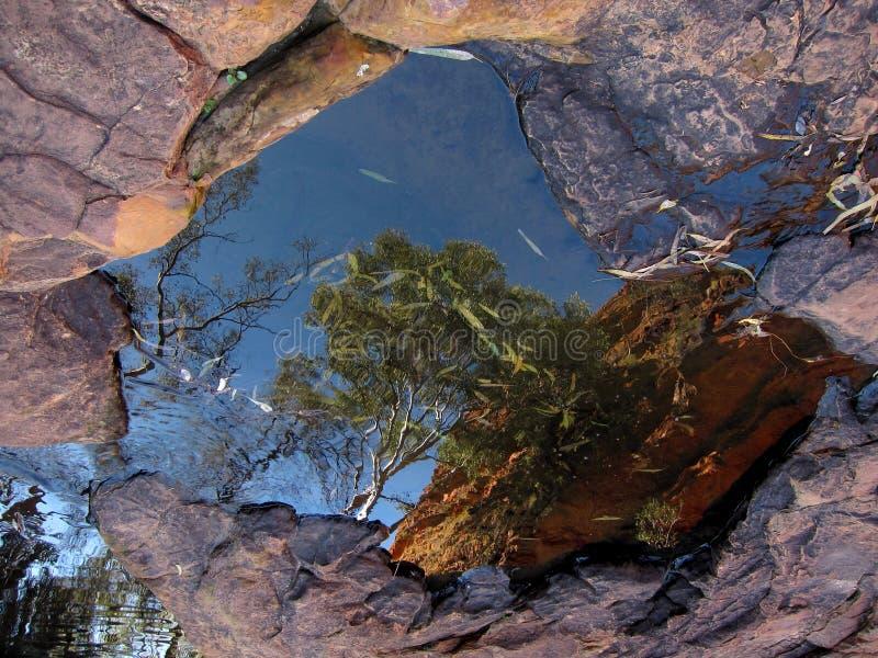Tree Reflection, Kings Canyon, Australia stock photo