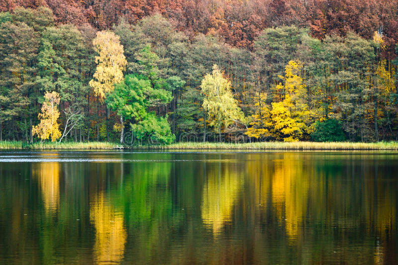 Tree reflection in the lake stock image