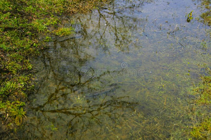 Tree reflection in water royalty free stock image