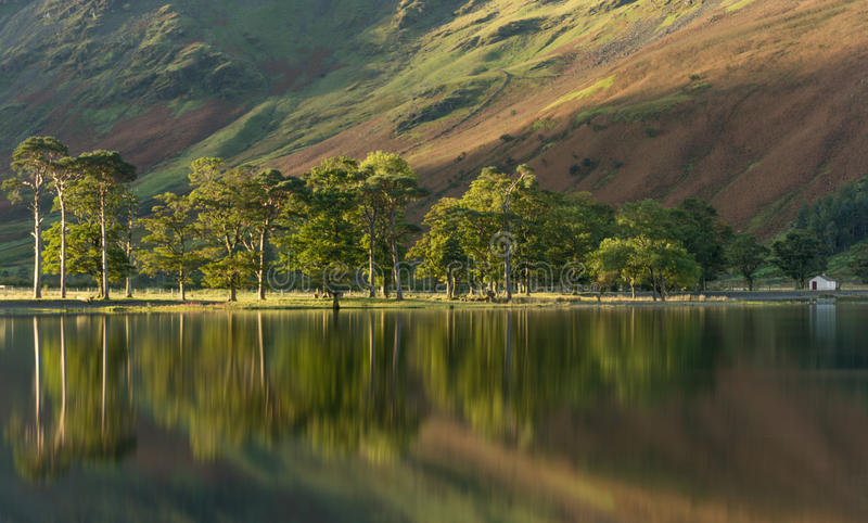Tree reflections in calm lake. royalty free stock photos