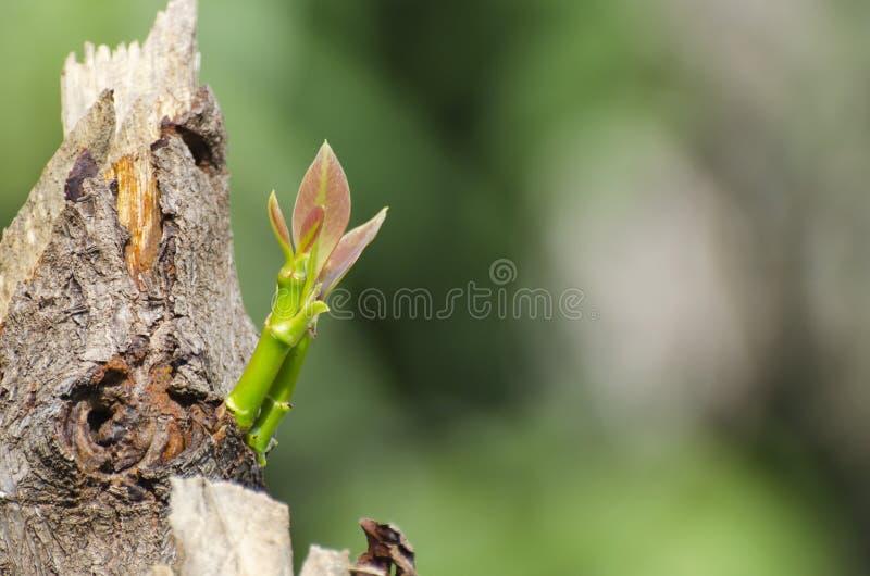 Tree regeneration royalty free stock photos