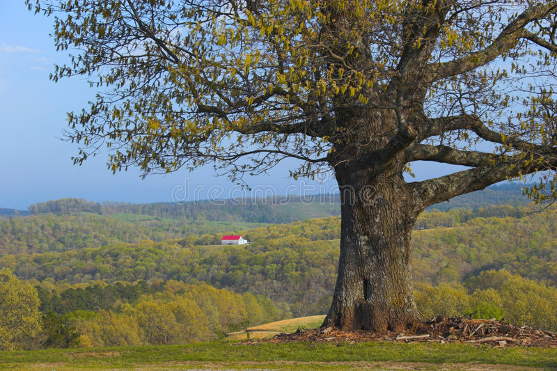 Tree and remote farm. With backdrop of hills and forests on the background stock photo
