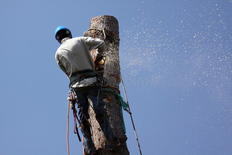 Tree Removal Jobs Stock Image