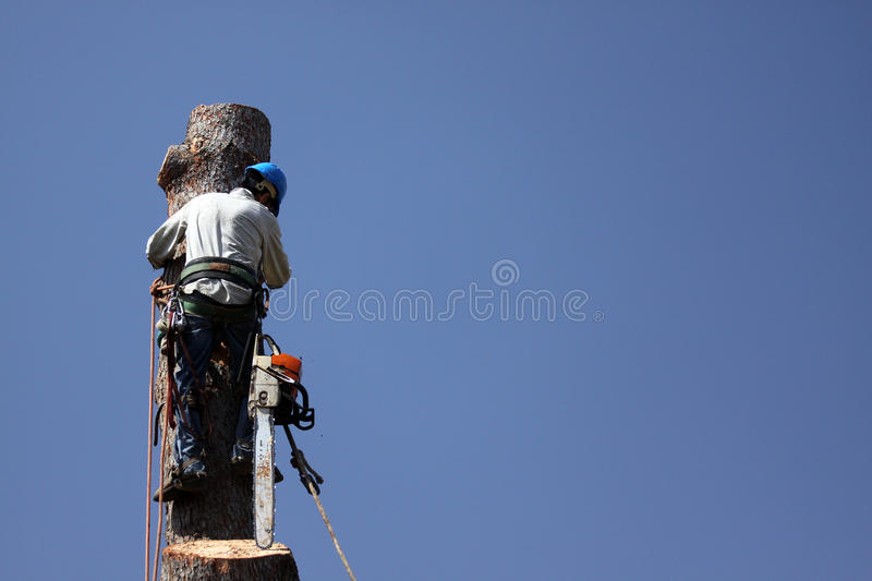Tree Removal Occupations royalty free stock photo