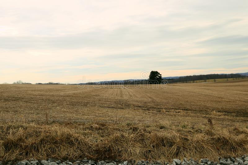 Lonely Tree in The Agriculture stock photography