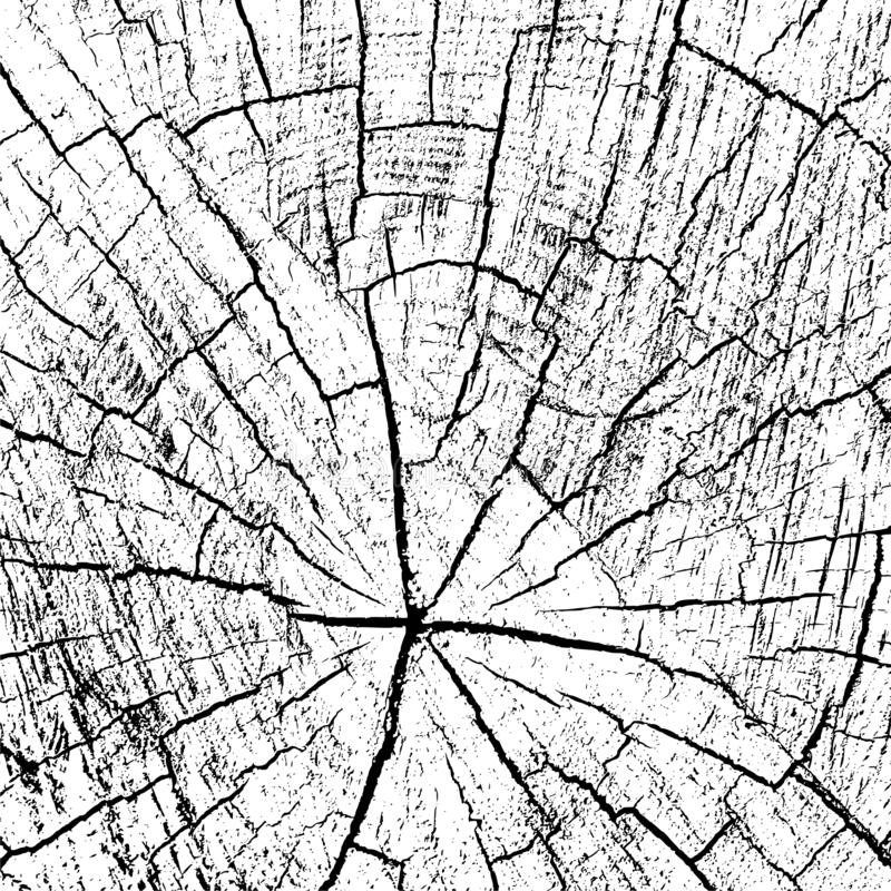 Tree ring icon logo, wood trunk, Black and white background royalty free stock photos
