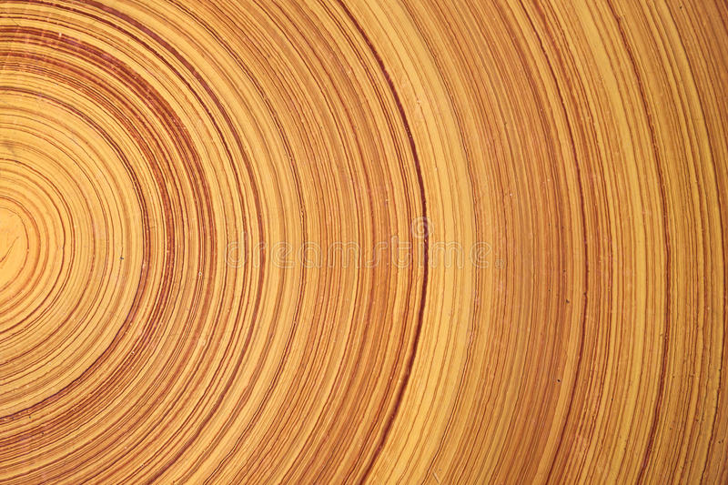 Tree ring. log. wood. Abstract background like slice of wood timber natural. Tree ring stock images