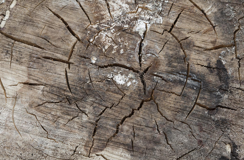 Tree rings close up stock image