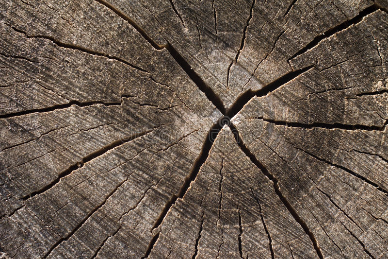 Tree rings with deep crack stock images