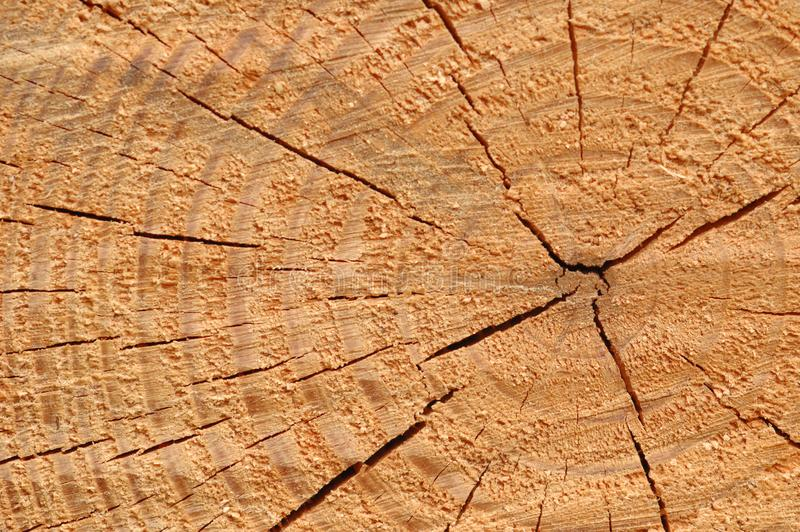 Tree rings mark time passage stock image