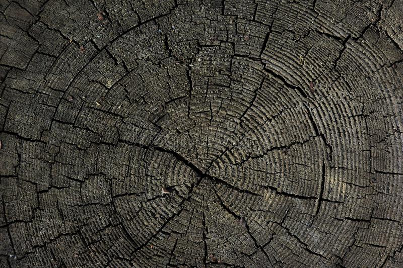 Tree rings old weathered wood texture with the cross section of a cut log. stock photography