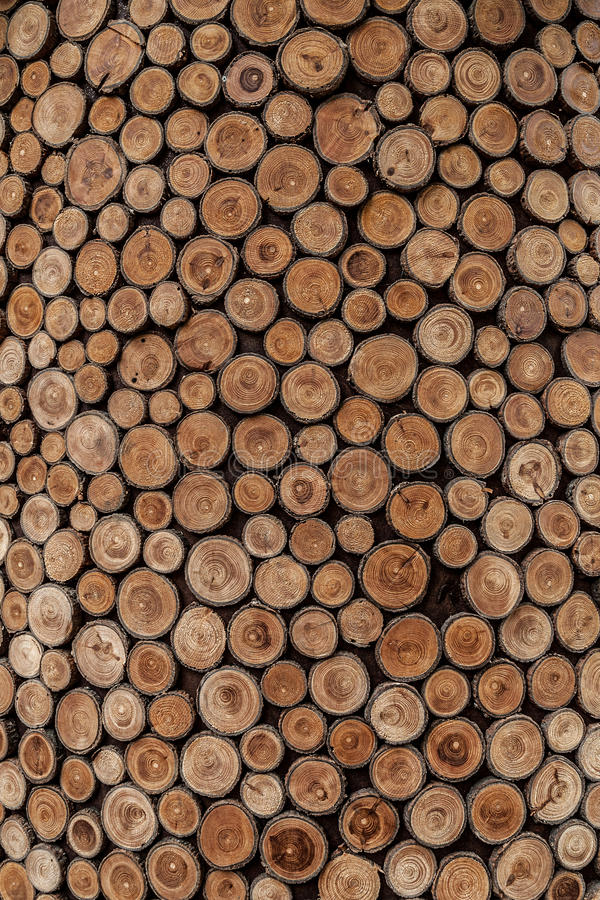 Tree Rings. Small tree rings next to each other royalty free stock photos