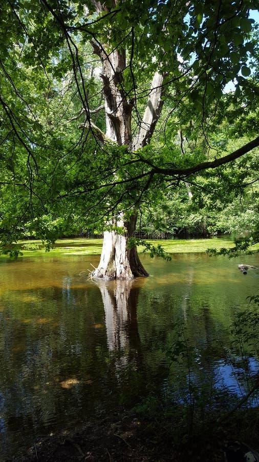 Tree in river stock image
