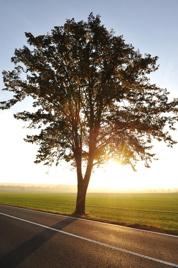 Download Tree on road stock image. Image of destination, forest - 23355573