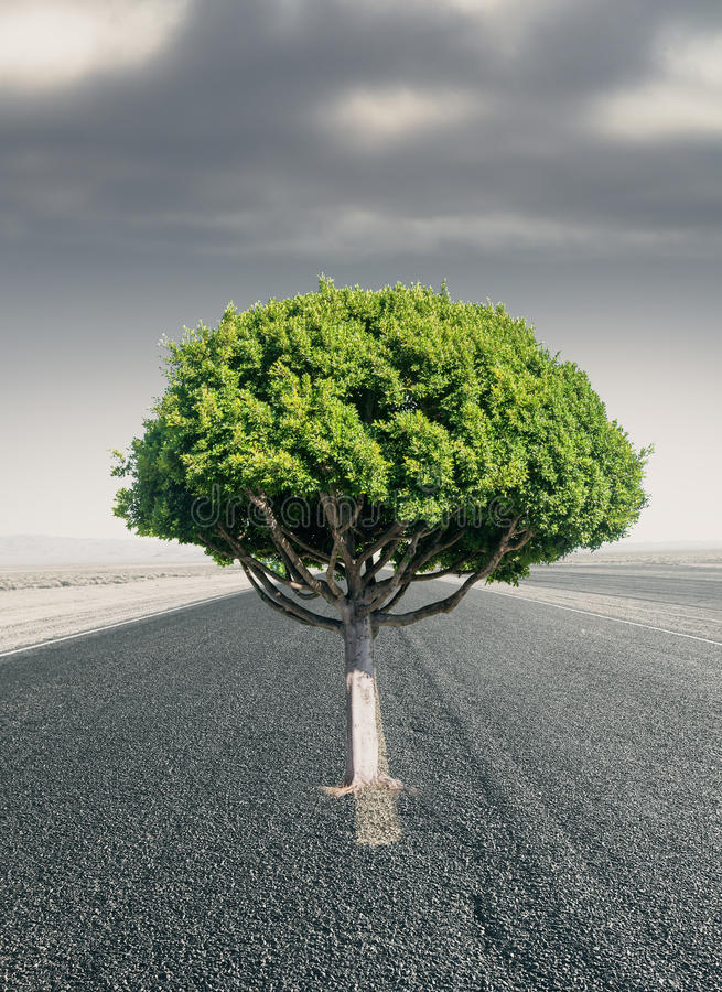 Tree on road. Creative green tree in the middle of road. Success concept royalty free stock images